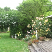 leach-garden-roses-use-for-flyer
