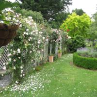 leach-garden-roses-on-fence