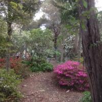 williams-garden-walk